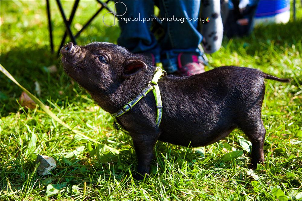 Elk Island Park- Bison Festival2